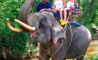 Krabi Elephant trekking option 1
